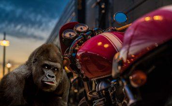 Valg av motorsykkel til nybegynneren - Hvilke råd skal man gi?